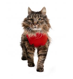 Medical Pet Shirt Kat