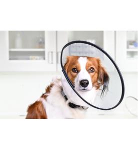 Buster Comfort Collar (Hondenkraag) - 5 stuks