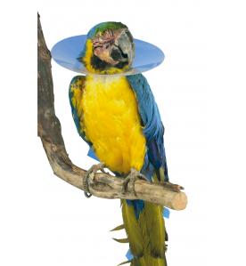Buster Bird Collar (Vogelkraag) - 15 stuks